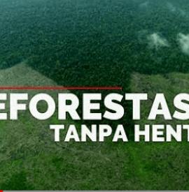 Deforestasi Tanpa Henti Video