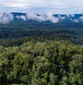 Aerial views rain forest in Long Bagun district, Mahakam Hulu Regency, East Kalimantan.